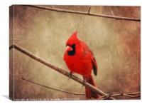 Cardinal, Canvas Print