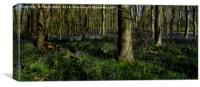 The Bluebells in Dukes Wood                       , Canvas Print