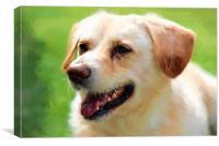 Timmy, a golden Labrador retriever mix., Canvas Print