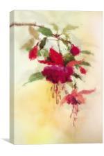 Fuchsia, Canvas Print