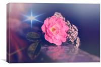 Midnight rose , Canvas Print