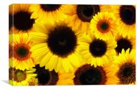 Sunflower sea, Canvas Print