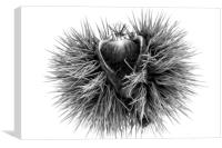 The sweet chestnut (Castanea sativa), Canvas Print