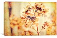Hydrangeas in the autumn , Canvas Print