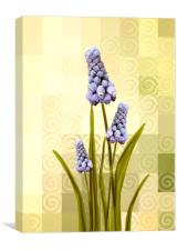 Grape hyacinths , Canvas Print