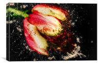 Tulips bloom abstract explosive, Canvas Print