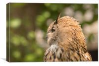 The owl , Canvas Print