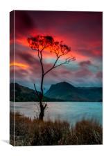 'Lone Tree' Buttermere Sunrise, Canvas Print