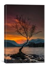 Llyn Padarn Lone Tree, Canvas Print