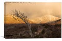 Lone Tree., Canvas Print