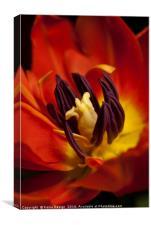 I'm on Fire - Tulip, Canvas Print