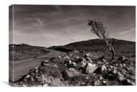 The Lone Tree, Islay, Scotland, Canvas Print