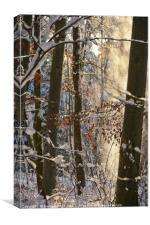 Golden Snow Flurry, Canvas Print