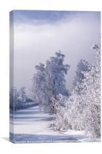 Beneath the Frosty Shroud, Canvas Print