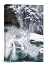 Frozen Trees and Rocks, Canvas Print