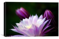 Cactus Blossom, Canvas Print
