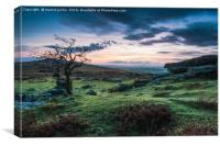 Lonely tree at sunset in Dartmoor Park, UK, Canvas Print