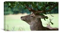 Deer Head, Canvas Print