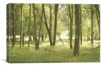 Summer Woodland, Canvas Print