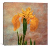 Water Iris - Textured, Canvas Print