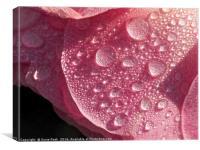 Strawberry Ice, Canvas Print