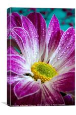 Chrysanthemum, Canvas Print