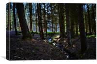 April woods, Canvas Print