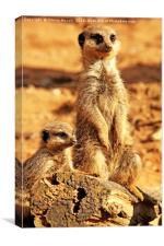 Meerkats Pose    , Canvas Print