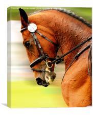 Horse Dressage Piaffe, Canvas Print