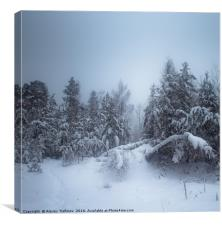 Winter Forest, Canvas Print