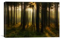 Morning forest, Canvas Print
