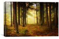 Bohemian Forest, Canvas Print