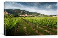 View of Durnstein through vineyards in summer even, Canvas Print