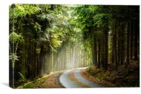 Czech forest in the day sunlight rays., Canvas Print
