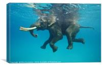 Swimming elephant, Canvas Print
