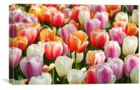 Dutch flowers, Canvas Print