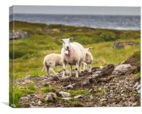 Lamb, Canvas Print