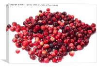 cranberries, berries, Canvas Print
