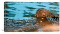 big lizard pops out of the water, Canvas Print