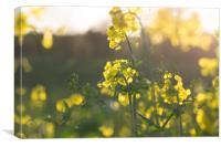Yellow sunset, Canvas Print