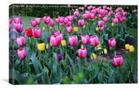 Tulips  , Canvas Print