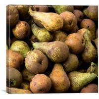 Pears , Canvas Print