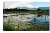 Rice Field, Canvas Print