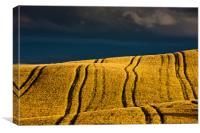 Golden Fields, Canvas Print
