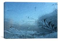 Frosty pattern , Canvas Print