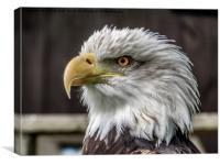 Eagle Eyes, Canvas Print