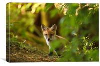 Cute Fox Cub, Canvas Print