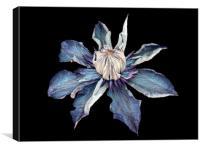 Blue Clematis, Canvas Print