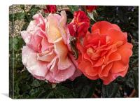 A Pair Of Roses, Canvas Print