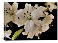 Lilies, Canvas Print
